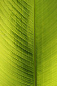 Green leaf of a palm tree — Stock Photo