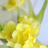 Fondo amarillo, borroso con flores — Foto de Stock