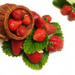 Strawberry — Foto de stock #1636813