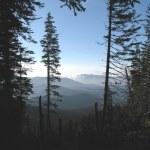 ������, ������: Mountainous forest