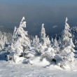 Stock Photo: Snowbound firs.