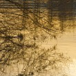Branch mirroring in water - Lizenzfreies Foto