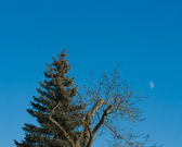 Blue sky with moon — Stock Photo