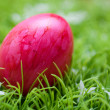 Eastern -  red egg — Stock Photo