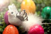 Fågeln sitter i solsken ett ägg — Stockfoto