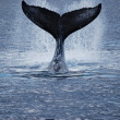Stock Photo: Whale Tail