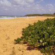 Stock Photo: Eastern Kauai Beach
