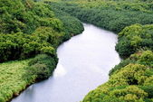 Wailua River — Stock Photo