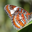 Butterfly — Stock Photo #1538695