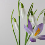 Spring — Stock Photo #1538785
