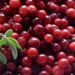 Stock Photo: Cowberry