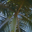 Palm tree — Stockfoto #1703043