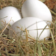 Stock Photo: Eier im Nest zu Ostern