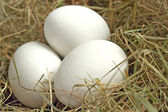 Eier im Nest zu Ostern — Stock Photo