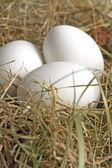 Eier im Nest zu Ostern — Stock Photo