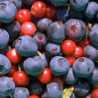 Cowberries and blueberries — Stock Photo