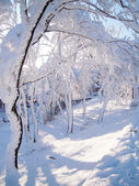 Solar winter weather: trees in snow — Stock Photo