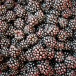 Blackberry background - Stock Photo
