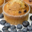 Blueberry muffins - Stockfoto