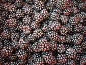 Blackberry background — Stock Photo