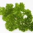 Parsley twig — Stock Photo