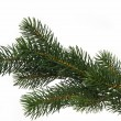 Fir tree branch — Foto de stock #1553580