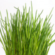 Stock Photo: Fresh chive