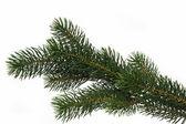 Dgrenvětev stromu jedle — Stock fotografie