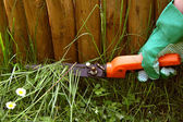 Trimming grass — Stock Photo