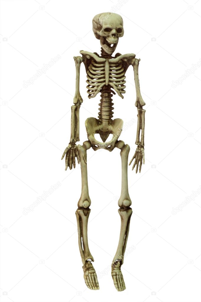 Halloween skeleton on white background — Stock Photo #1552635