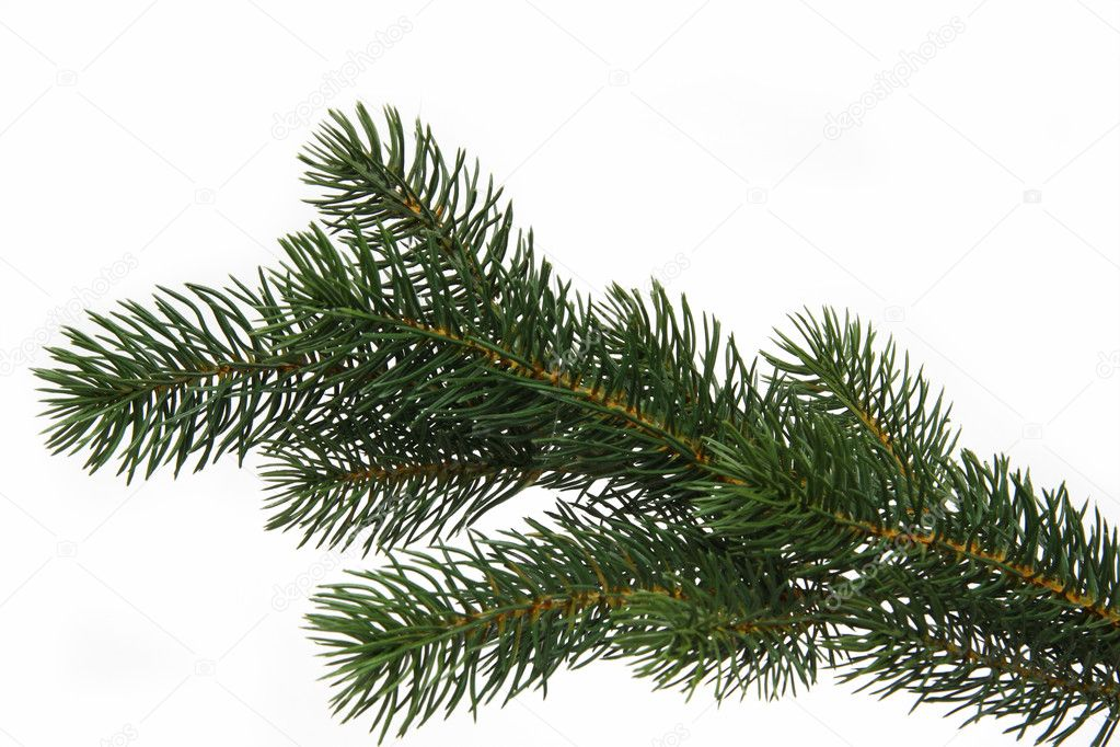 Plastic fir tree branch isolated on white background — Stock Photo #1553580