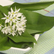Wild garlic — Stock Photo
