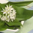 Wild garlic — Stock Photo