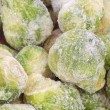 Brussels Sprouts_8 — Stock Photo