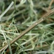 Stock Photo: Needle in haystack