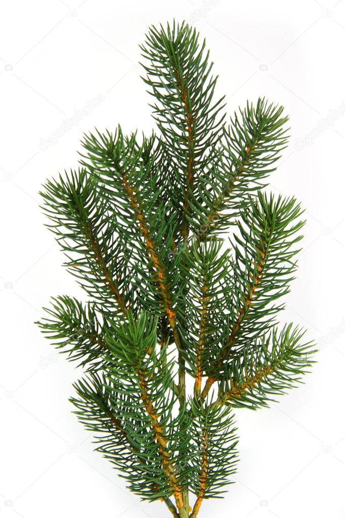 Plastic fir tree branch isolated on white background — Stock Photo #1562962