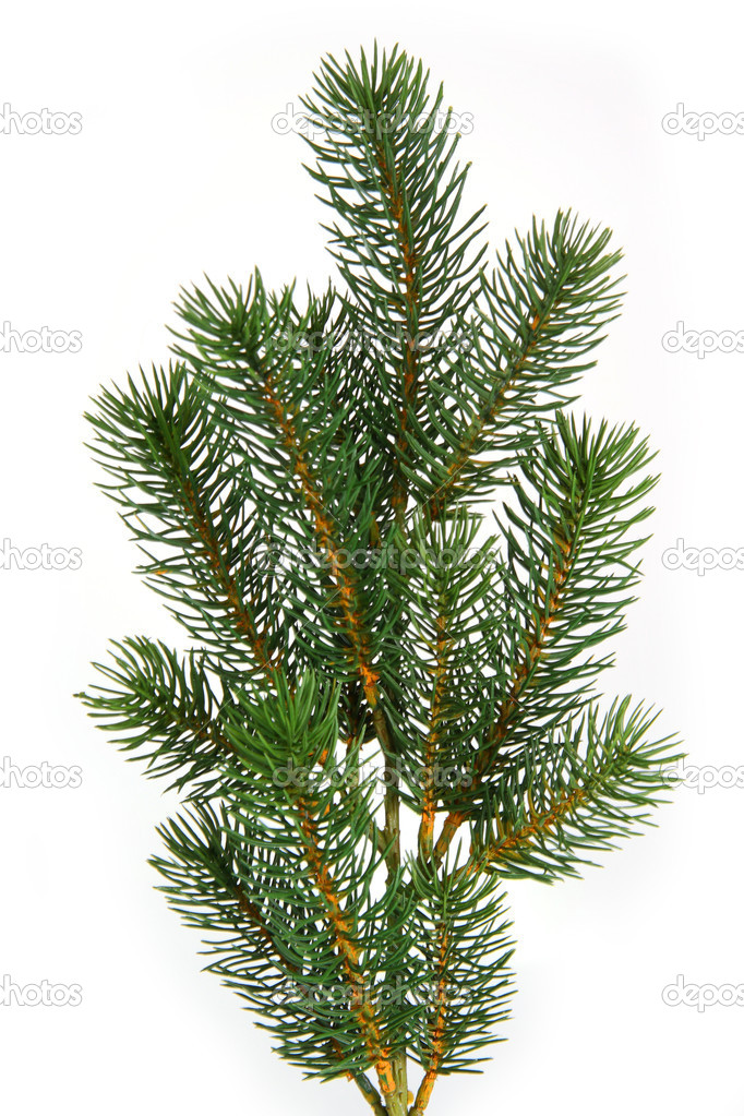 Plastic fir tree branch isolated on white background  Foto de Stock   #1562962