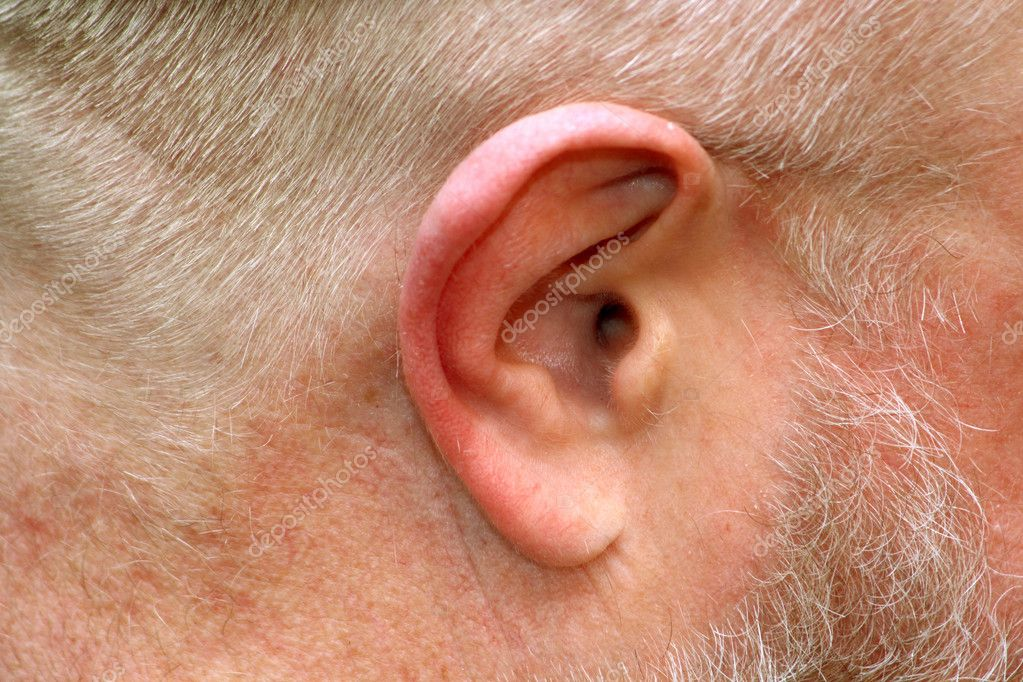 Close up of anatomy of human ear. — Stock Photo #1563017