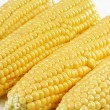 Stock Photo: Corn crop