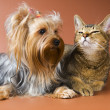 Stock Photo: Cat and puppy in studio
