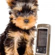 The puppy with a mobile phone - Stok fotoraf