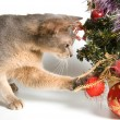 Cat with Christmas-tree decorations — Stock Photo