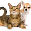 Puppy with a cat - Stock Photo