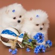 Puppies with a vase - Stock Photo