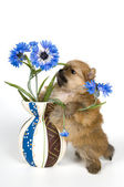 Puppy with a vase — Stock Photo