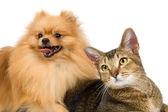 Spitz-dog and cat — Stock Photo