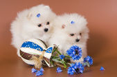 Puppies with a vase — Stock Photo