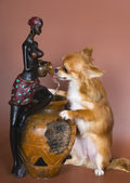 Puppy satisfies thirst — Stock Photo