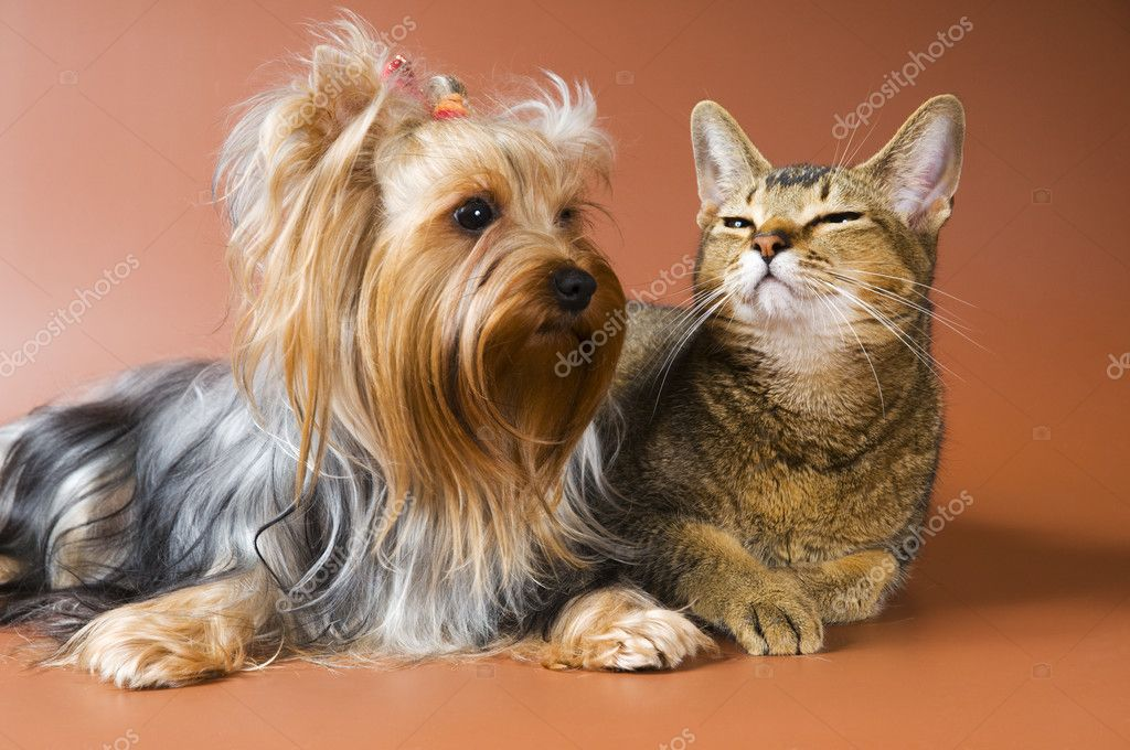 Puppy and cat in studio on a neutral background — Stock Photo #1541297