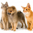 Puppy and cats in studio — Stock Photo